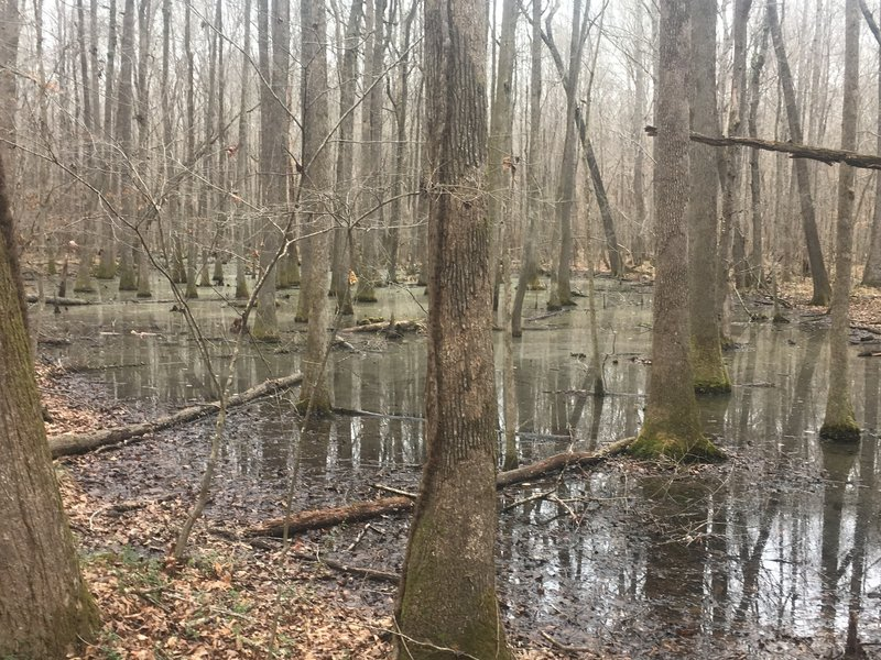 Swampy area along Trail 6