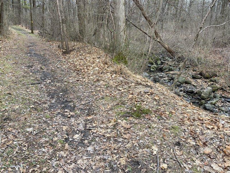 Stream beside the trail