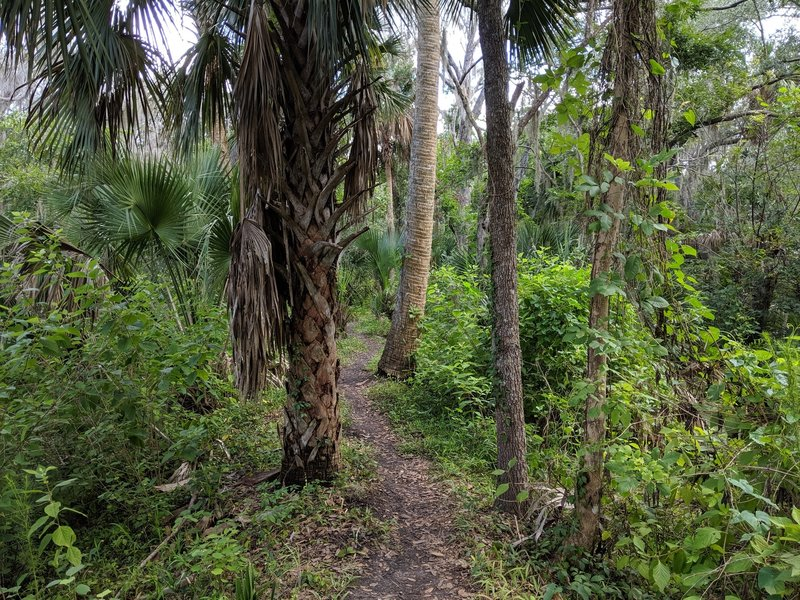 Hiking on the Black Bear Wilderness Trail
