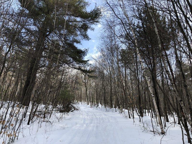 Cabin Trail follows a snowmobile trail for a short period