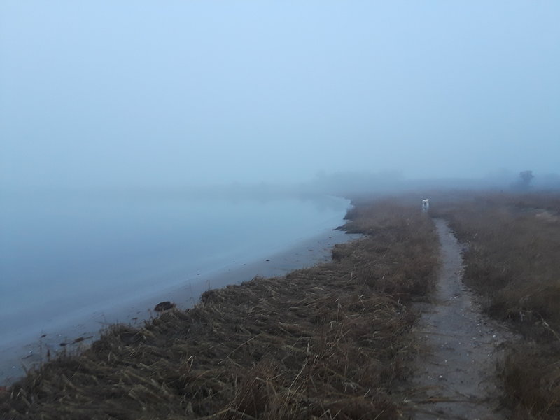 On the bay side of the point in heavy fog