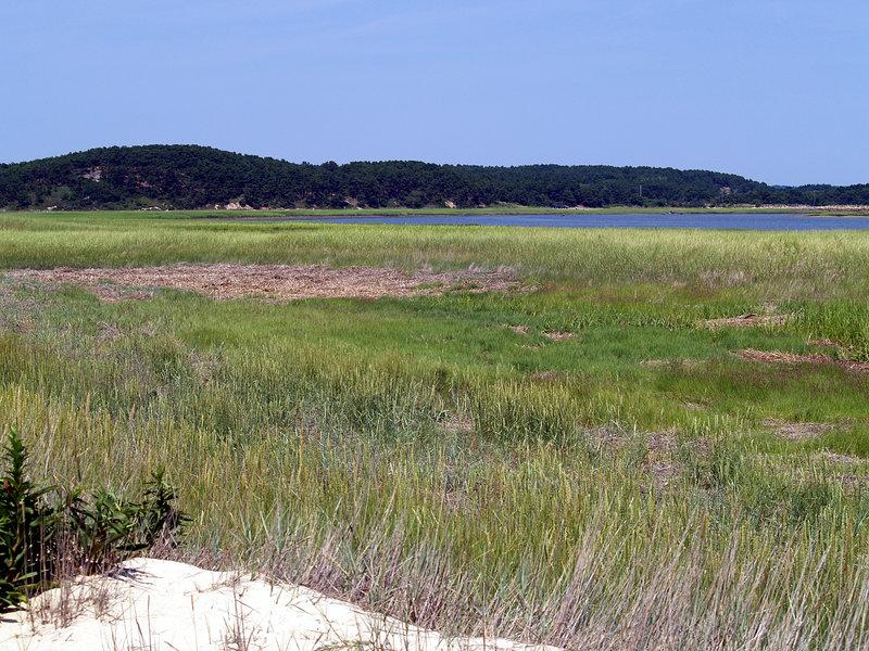 On the walk from Great Island (Wellfleet, MA)