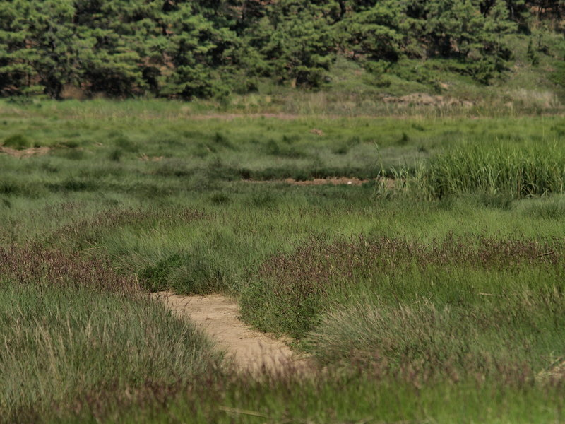 Grasses In The Gut (Wellfleet, MA)