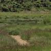Grasses In The Gut (Wellfleet, MA)