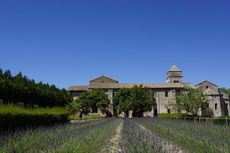 Lavender Field - Provence France