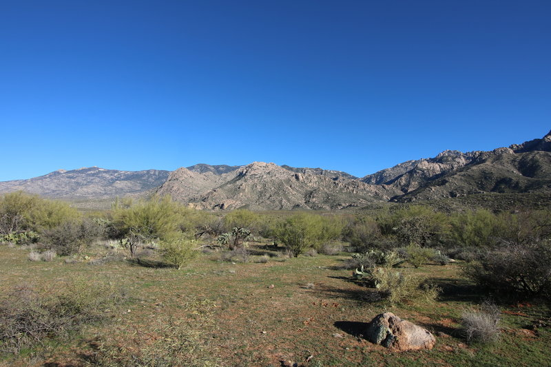 Catalina Mountains from the Nature Loop Trail in January after a rainy December