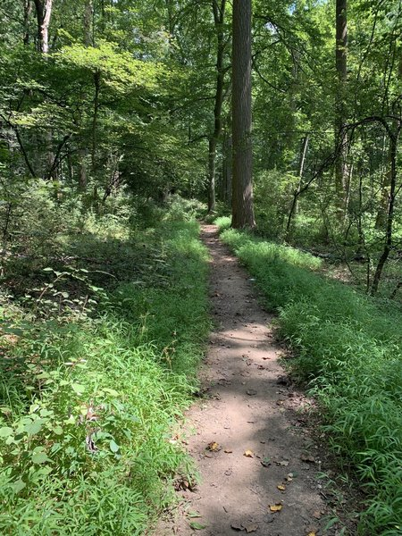 Typical path on the trail