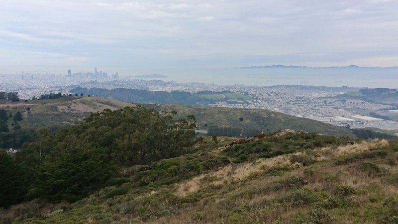 View of the bay and SF, near the summit