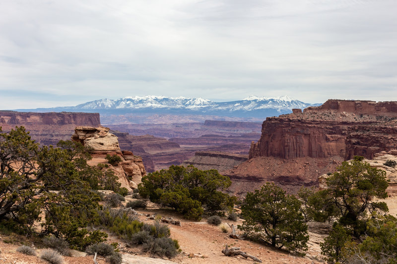 Snow covered La Sal Mountains from the Neck Spring Trailhead