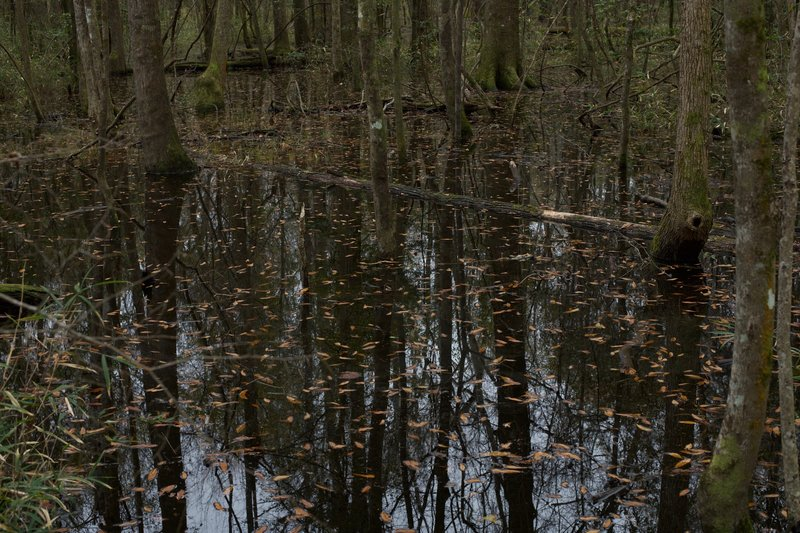 In the winter, the area south of the Boardwalk Trail floods, making it impossible to continue. However, if you are looking to escape the crowds for a little bit, you can head down to where the flood waters come up on the trail.