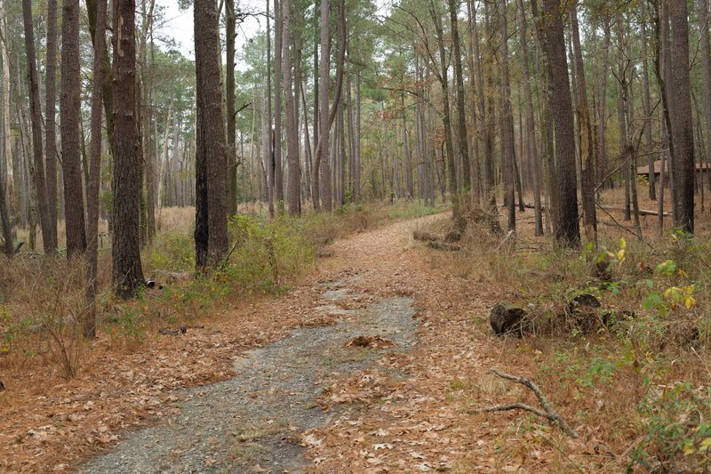 The Caroline Sims Road runs through the woods back toward the boardwalk trail. Made up of gravel, this road meets up with the Boardwalk Trail.