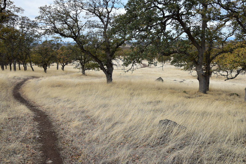 A touch of Fall Color through the dry grass and Oak trees