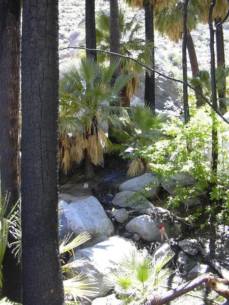 Among the Hellhole Palms