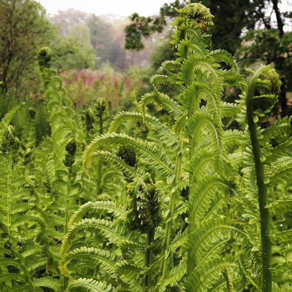 Another edit of the fern foto