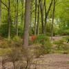 Forest view through Tyler Arboretum.