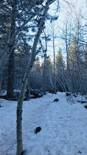 1/20/20 hike. Sharing photo to show conditions of trail. Icy and slippery. Bring clip-ons for shoes to get better traction. Snow is not deep. Just icy.