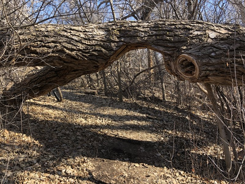 Creative solution for a downed tree!