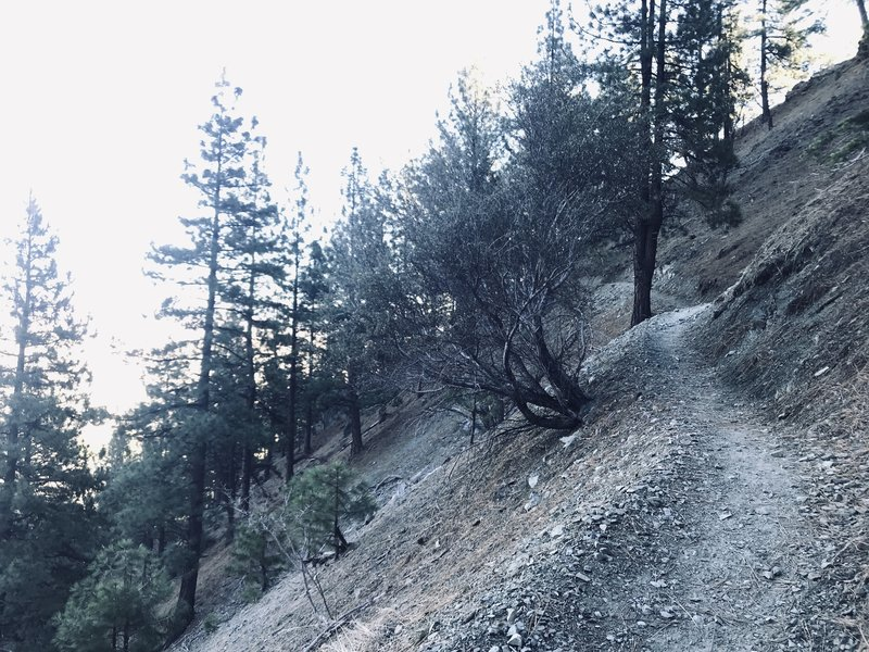 This photo is pretty indicative of trail width and steepness of hillside along trail. Plenty of room to walk. But if this concerns you, it is not the hike for you.
