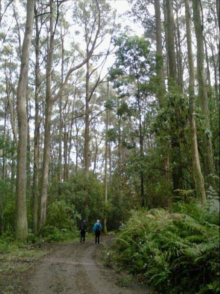 Macedon Ranges Walking Trail