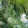 Ichetucknee Springs Water