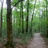 Ichetucknee Springs Hiking