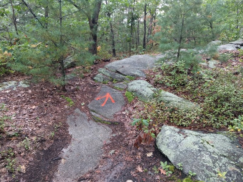 The start of the Awesome-Sauce Trail. Follow the orange arrow into a steep uphill.