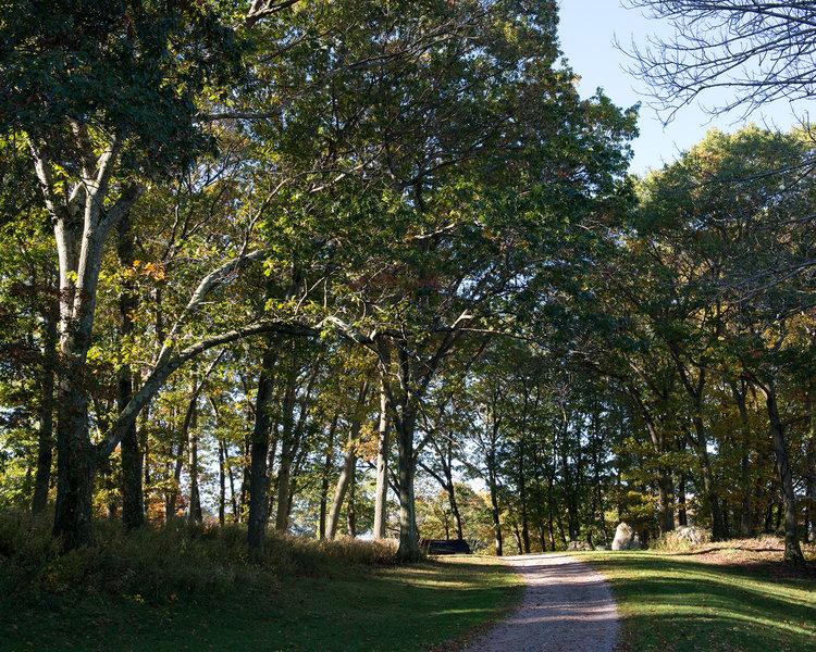 Weld Hill Oaks