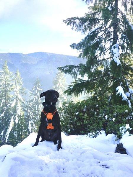 Roscoe at the snowy top of the trail.