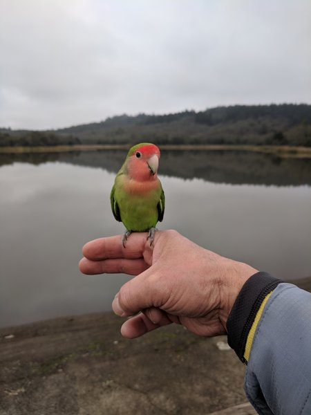 Love bird at Lake Ilsanjo.