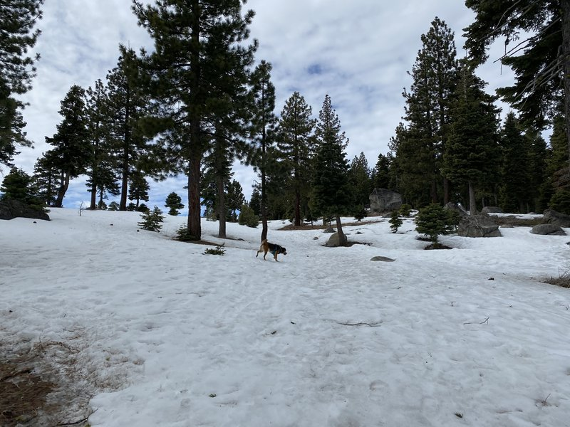 Feb 2020 - plenty of snow