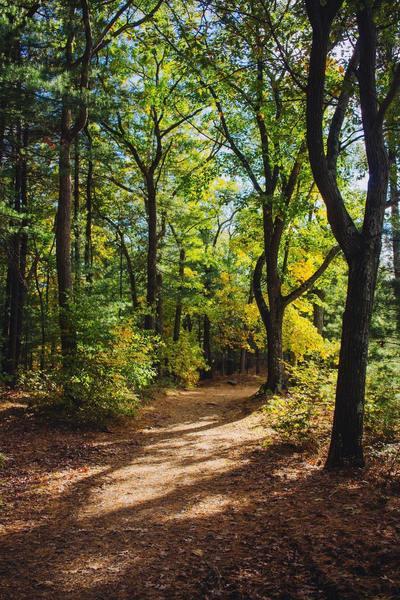 sunlight passing thru trees