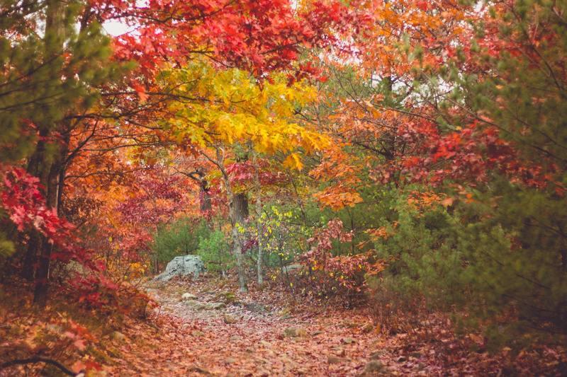 Middlesex Fells, Medford, United States