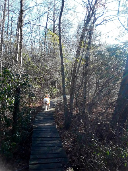 A nice trail around Hidden Lake with bridges and steps.