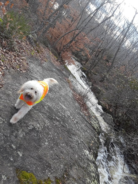 Jack is enjoying one of the many streams which empty into Green Falls Pond.
