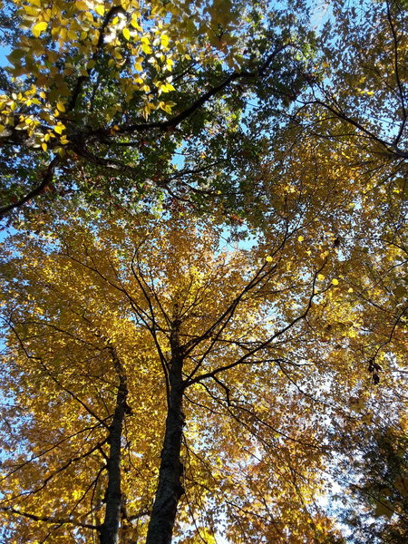 The light is always special in autumn. The ambient light is usually set afire.