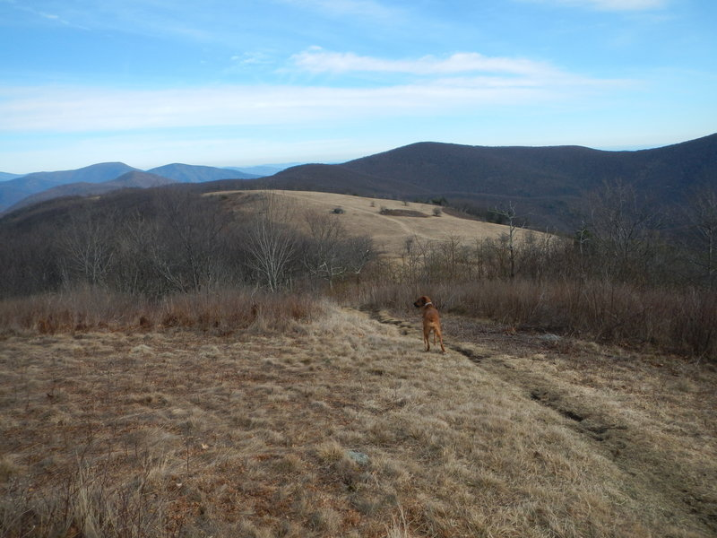 View north from summit of Cole Mountain on the Appalachian Trail, with summits as far away as Shenandoah National Park easily visible.