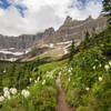 Iceberg Lake Trail lined with Bear grass, Glacier National Park. NPS Photo/David Restivo