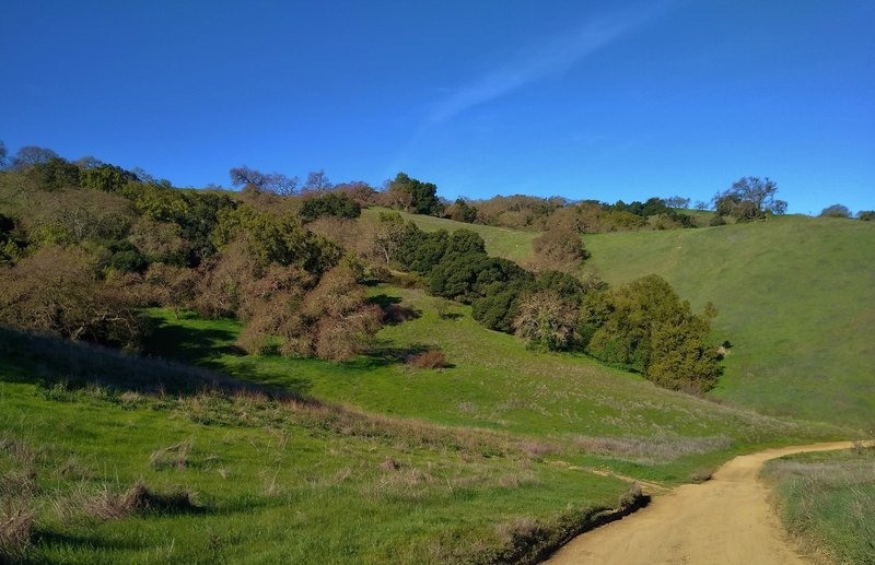 The grass hills with stands of oaks and California buckeyes, on a clear February day, along Oak Cove Trail