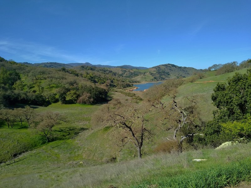 The grass and wooded hills of Calero County Park in February, with Calero Reservoir in the distance.  The Santa Cruz Mountains are in the far distance with Mt. Umunhum (3,488 ft.) left center. looking west from Oak Cove Trail.