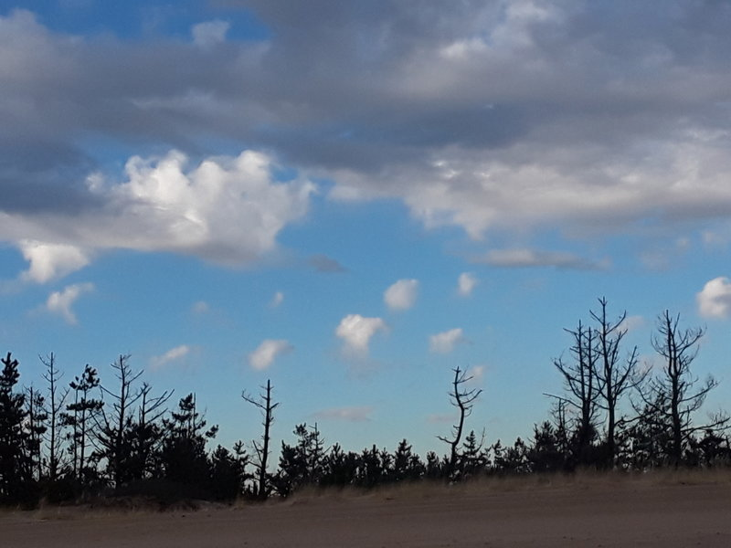 The silhouette of the pines on the sky are a prominent feature of this beach hike.