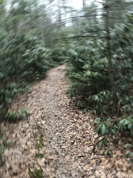 Canada Hollow Trail