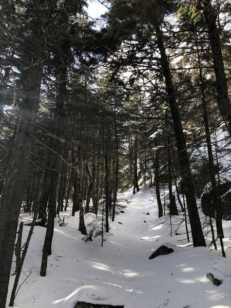 Wentworth Trail