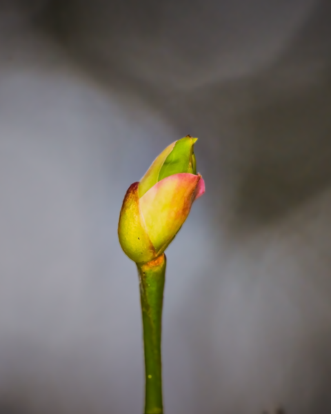 Buds are starting to appear - Spring is not too far away!