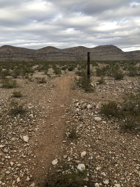 This portion of the trail can be a bit hidden so just look for this wooden post and run to it and you'll see the trail.