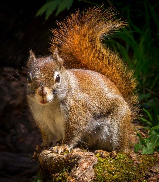 Squirrel at Rainbow Falls in the Great Smoky National Park