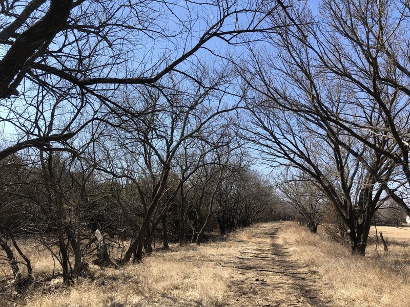 This section is a connection between the north-south trails and there's lots of potential to see deer and other critters here.