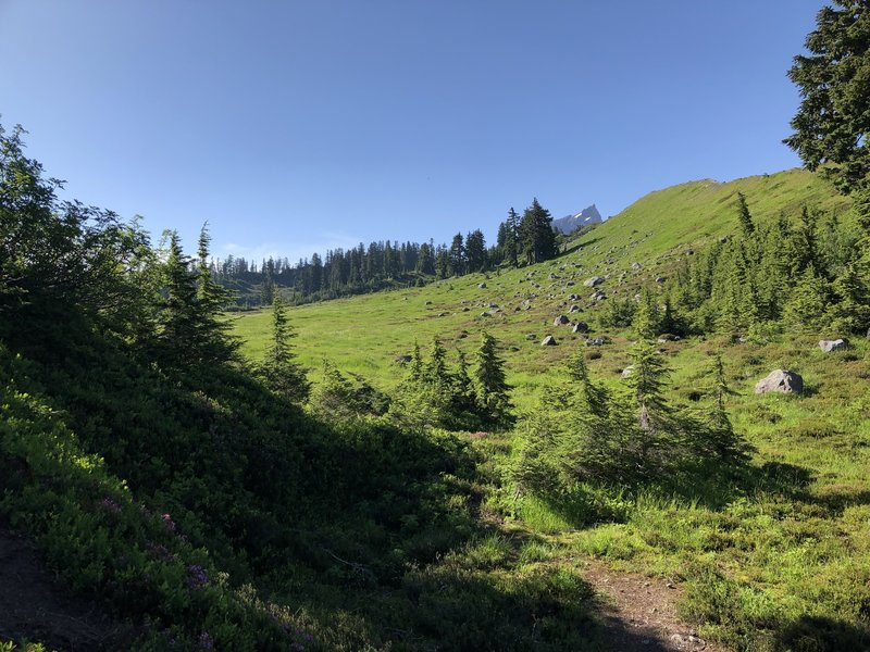 The meadows at the top of the climb on the Park Butte Trail.