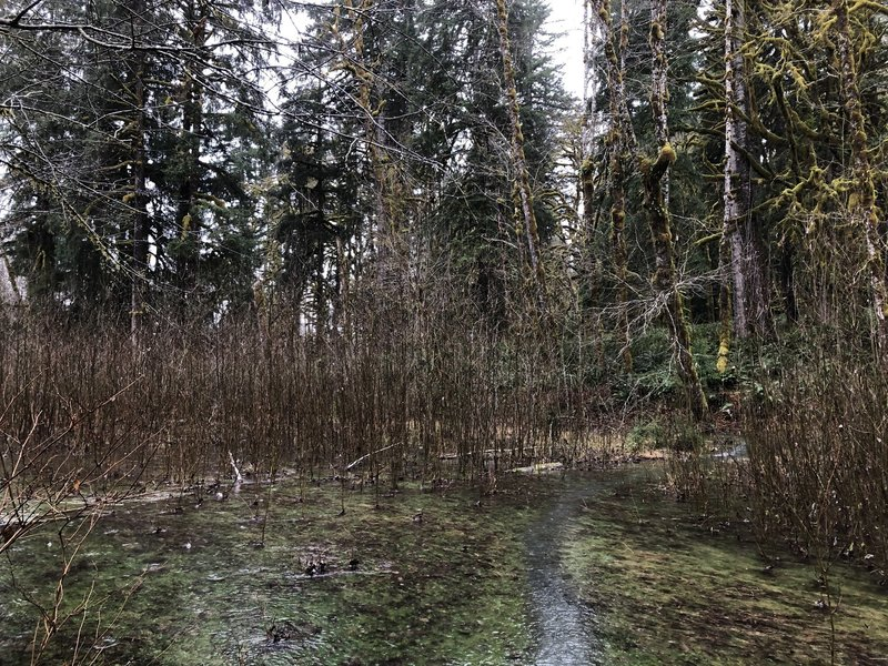 Flooding on the North Fork Quinault River Trail