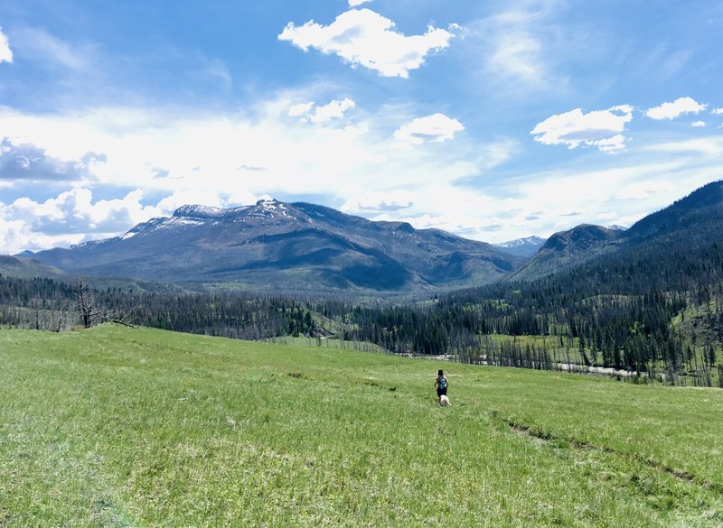 Open views into the South Fork Sun River country. May 2018.