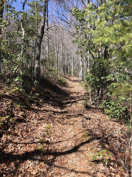 The Noland Divide Trail